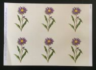 Aster Card Topper Sheet