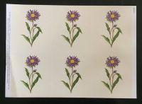 Aster Card Topper Sheet