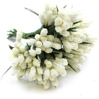 Miniature Grape Hyacinth Cream